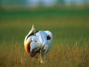 Doğu Anadolu'nun Kuşları Zor Durumda