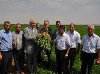 Gaziantep'te Yer Fıstığı Üretimi