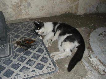 Denizli'de Işkenceyle Öldürülmüş Kedi Ve Köpekler Bulundu