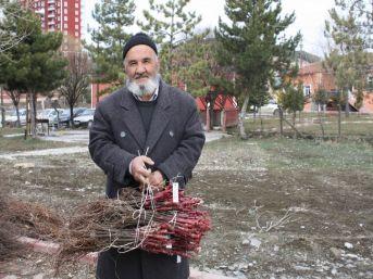 Yozgat'ta 40 Bin Bağ Çubuğu Fidanı Dağıtıldı