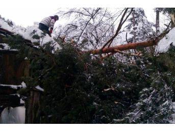 Kastamonu'da Bir Evin Üzerine Ağaç Devrildi