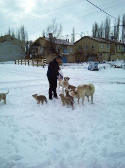 Köpekler Fırıncıyı Bekliyor