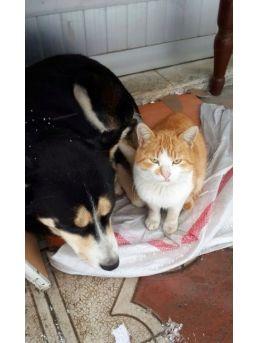 Sakarya'da Kedi İle Köpeğin Dostluğu Görenleri Şaşırtıyor