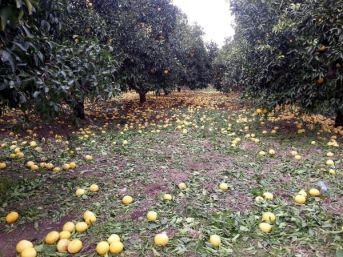 Ortaca Ziraat Odası: Doğal Afet Nedeniyle Çiftçinin Borcu Ertelensin