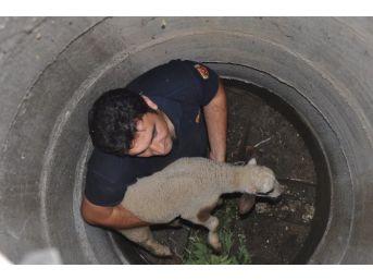 Düzce İtfaiyesi 2014 Yılında 29 Hayvan Kurtardı