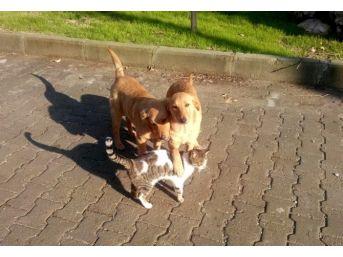 Milas'ta Kediler Ve Köpeklerin Şaşırtan Dostluğu