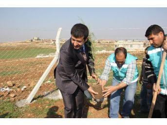 Kırsalı Ağaçlandırma Kampanyası
