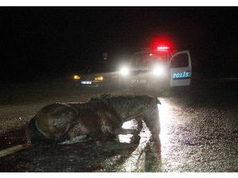 Yaralı At Saatlerce Kurtarılmayı Bekledi