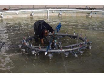 Düzce'de Havuzlar Temizleniyor