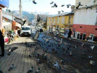 Posof Esnafı Kuşları Aç Bırakmıyor