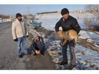 Yaralı Köpeğe Sahip Çıktı