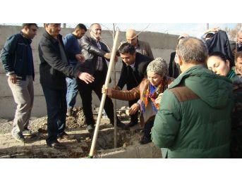 Silopi Belediyesi Üç Bin Fidanı Toprakla Buluşturdu