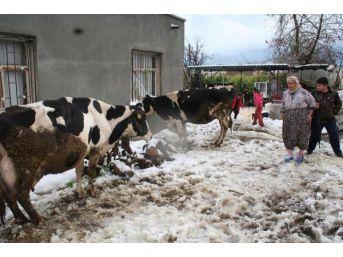 30 Yıl Sonra Yağan Kar, Seralarda Zarara Neden Oldu