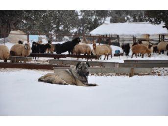 Mersin'de Sahile Kar Yağdı