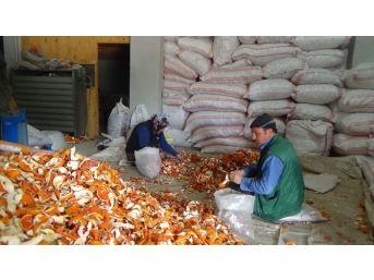 (özel Haber) Portakal Kabuğu Ekmek Kapısı Oldu