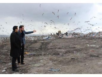 Çevre Mühendisleri Odası: Van Çöplüğü Patlamak Üzere