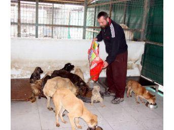 (özel Haber) Bursa'da Ölü Bulunan Köpeklerde Zehre Rastlanmadı