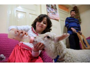 Milas'ta Lösemiye Karşı Hayvan Terapisi