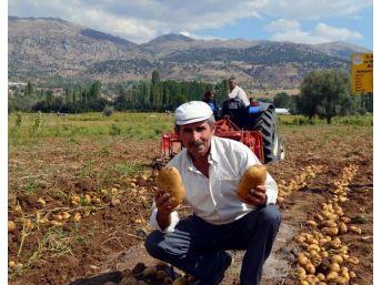 Patates Üretimi 1 Milyon Tona Ulaştı