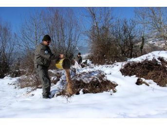 Karda Yiyecek Bulamayan Hayvanlar Için Yemleme Yapıldı