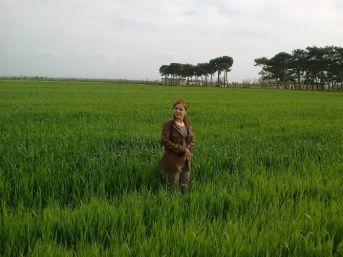 Mazot, Gübre Ve Toprak Analizi Desteği Ödemesi Başladı