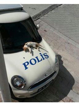Polis Otosu Üzerinde Güneşlendi