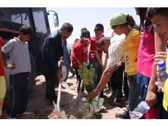 Niğde Belediyesi Ağaç Fidanı Dağıtacak