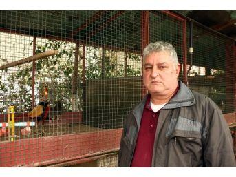 Taksi Durağını Kuş Cennetine Çevirdi