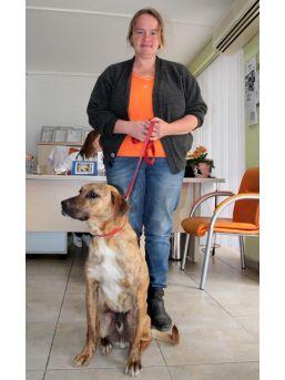 Alanya'da Zehirlenen 3 Köpek Telef Oldu