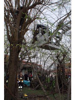 Dallarını Budamak Için Çıktığı Ağaçta Mahsur Kaldı