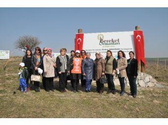 Edirne'de Topraklar Bereket Ormanları İle Buluştu