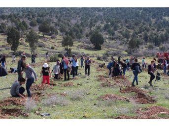Sarıcakaya'da Ağaç Dikme Şenliği