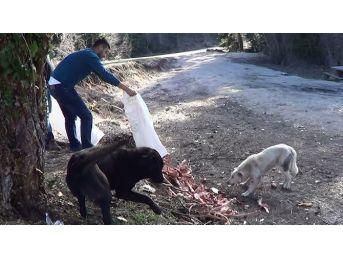 Ormanlık Alana Terk Edilen Köpekleri Hayvan Severler Besliyor