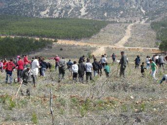 Mut'ta Öğrenciler 3 Bin 200 Fidanı Toprakla Buluşturdu