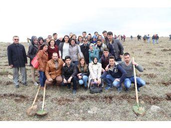 Bozok Üniversitesi Öğrencileri 700 Fidanı Toprakla Buluşturdu