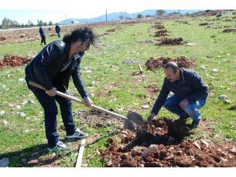 Didim'de Kamu Çalışanları Fidan Dikti