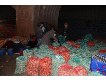 Patateste Karaborsa Yok, Depolarda Ürün Var