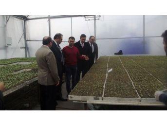 Vali Kaban Çaycuma'da Tarımsal İşletmelerde İncelemelerde Bulundu