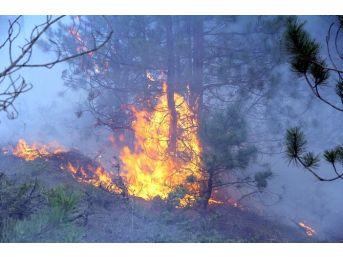 Kastamonu'da 5 Hektarlık Ormanlık Alan Yandı
