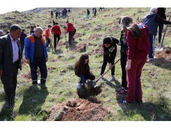 Yeşilyurt Mahallesi'ne Öğrencilerin Katılımı İle 500 Adet Çam Fidanı Dikildi