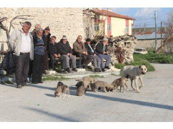 Mahalleli Yavru Köpeklere Sahip Çıkılmasını İstedi