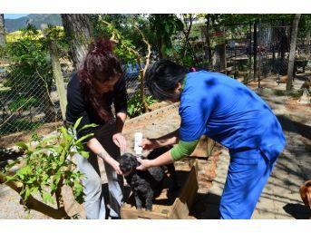 Haydos'dan Sanal Ortamda Ve Pet-shoplarda Hayvan Satışına Tepki