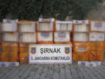 Şırnak'ta 566 Bin 930 Paket Kaçak Sigara Ele Geçirildi