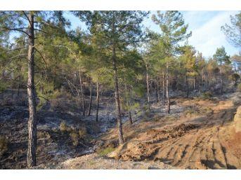 Köyceğiz'de Mevsimin İlk Orman Yangını