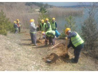 Pazarlar Göleti'nin Çevresi Ağaçlandırıldı