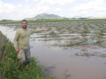 Çukurova'da Şiddetli Yağış Ve Dolu Tarım Arazilerini Vurdu