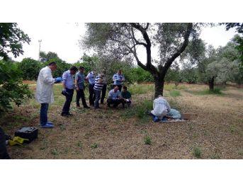 Aydın'da Cezaevinden İzinli Çıkan Şahıs İntihar Etti
