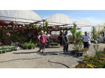 Burhaniye'de Kışın Sert Geçmesi Çiçekçilerin İşini Arttırdı
