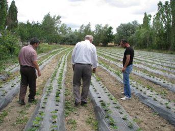 Yozgat'ta Çilek Bahçeleri Oluşturuluyor
