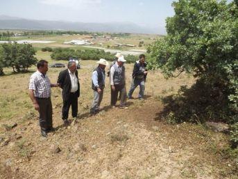 Seydişehir'in Bazı Mahallerini Çekirgeler İstila Etti